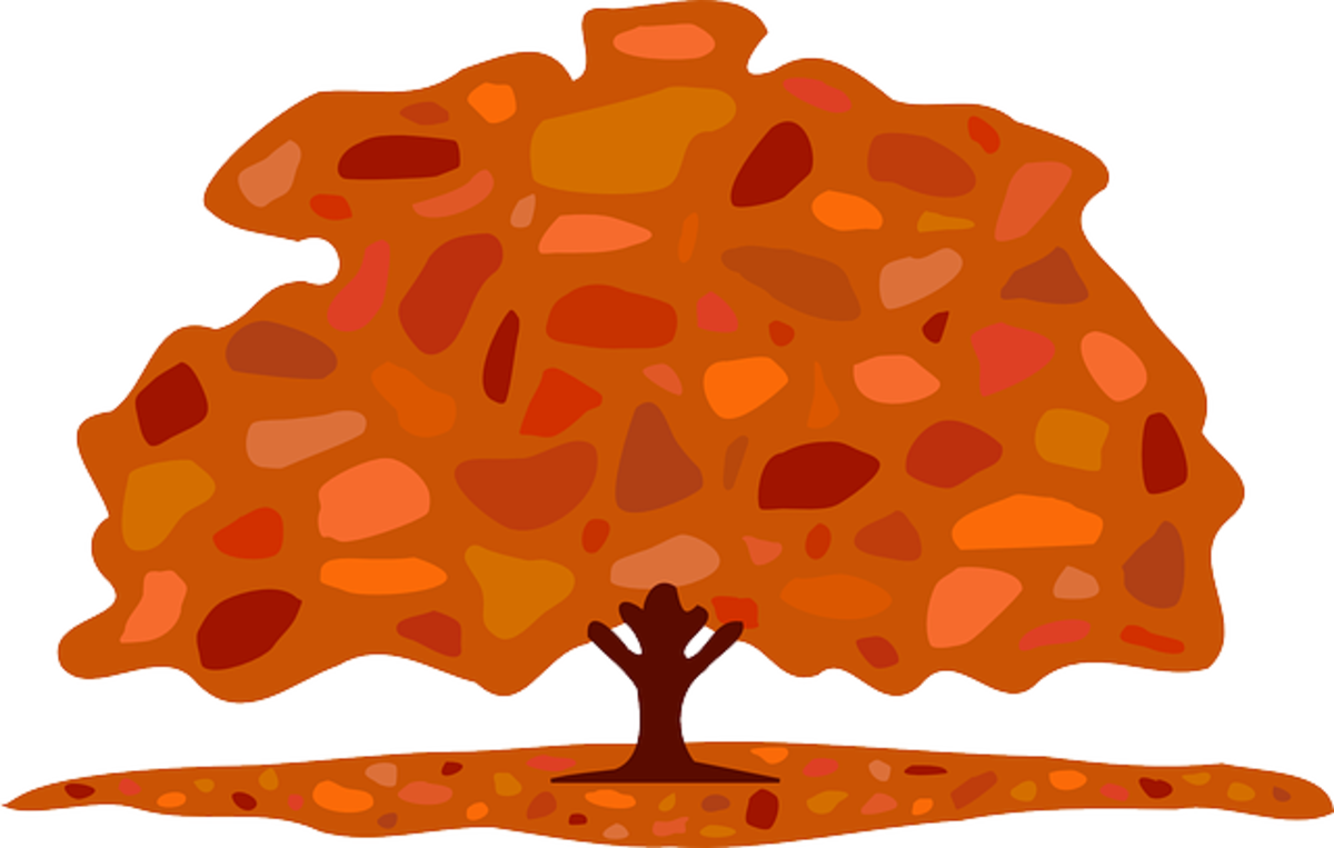 Tree with Orange and Red Leaves