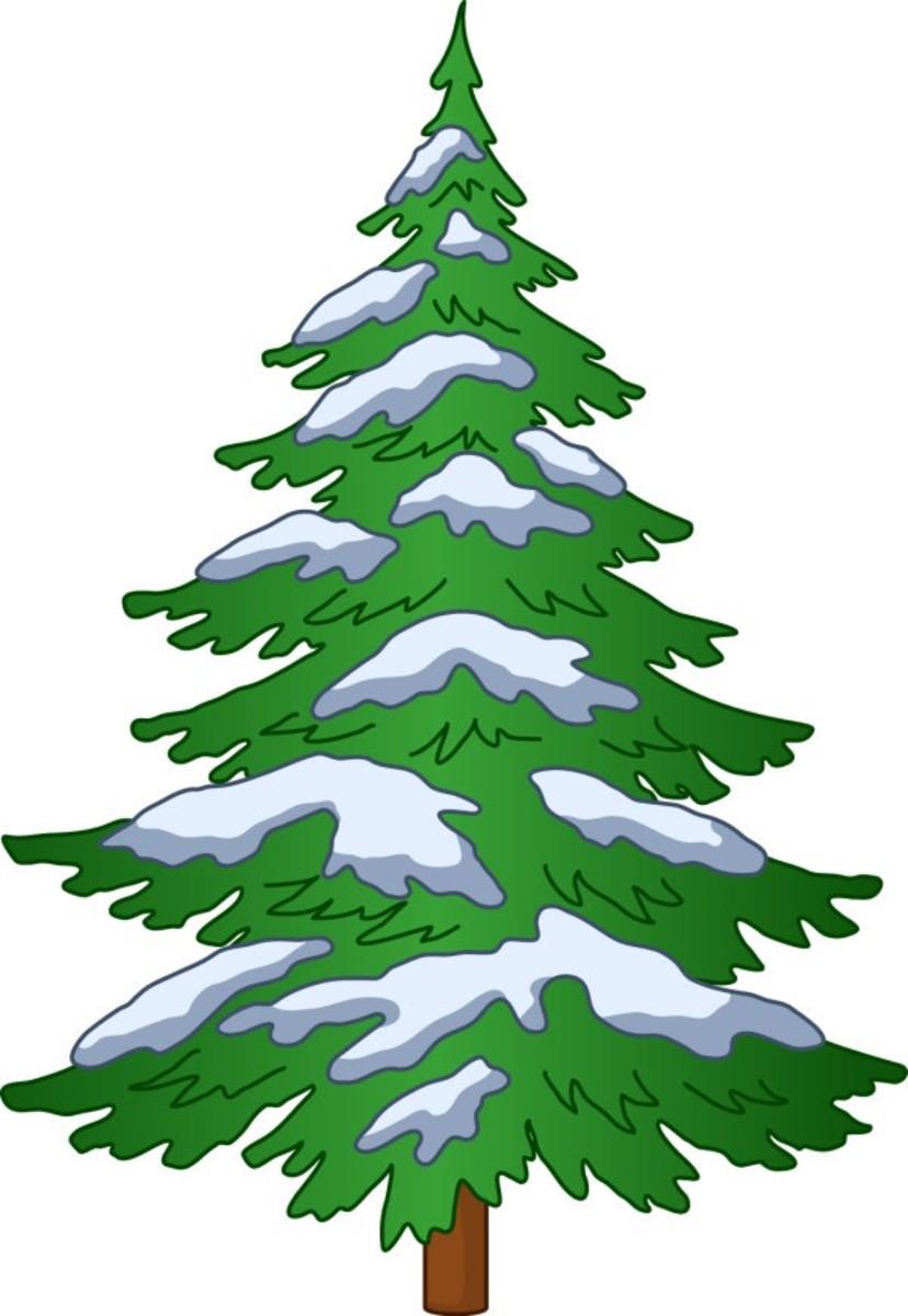 Cedar Tree with Winter Snowfall