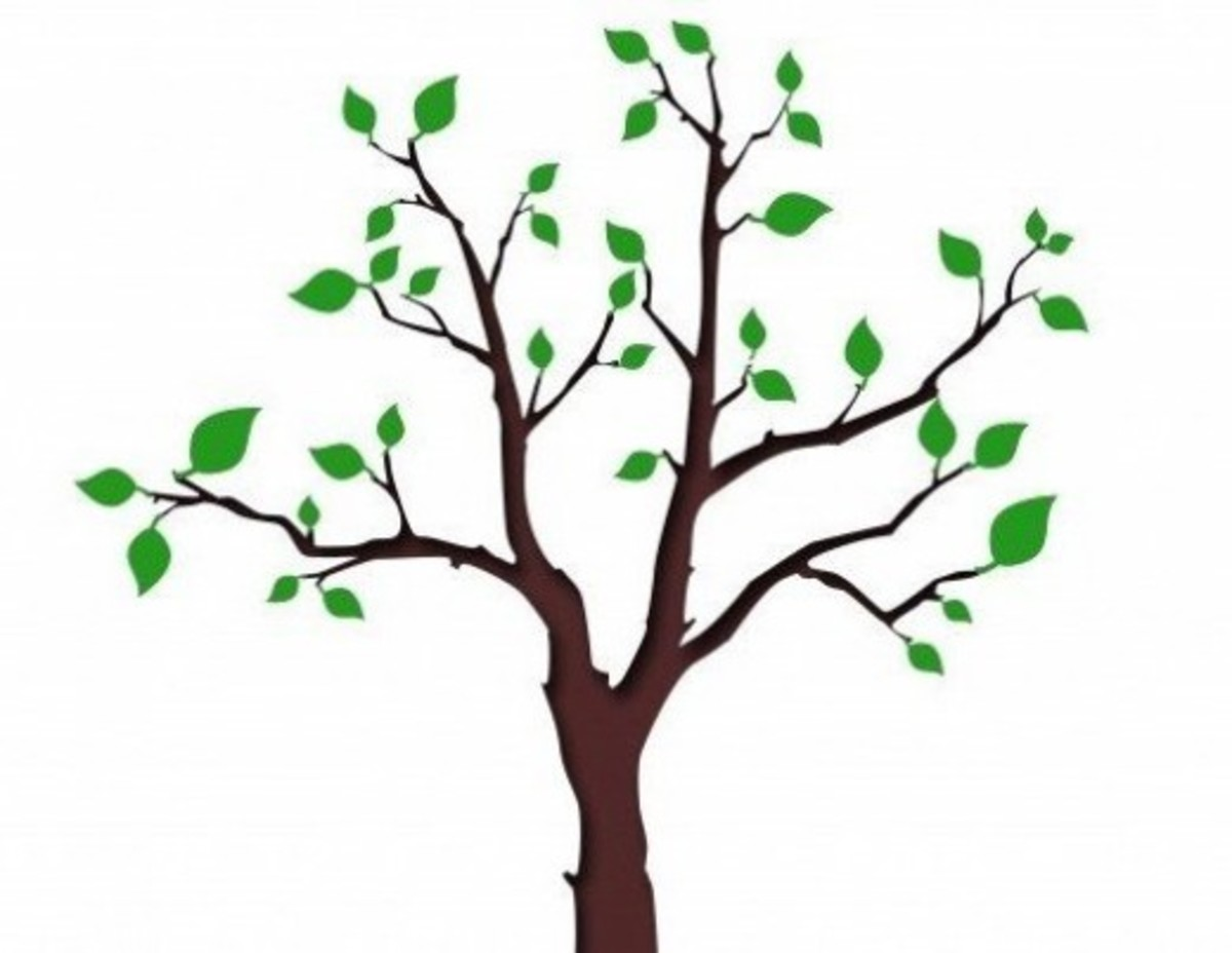 Tree with Leaves Just Sprouting in Spring