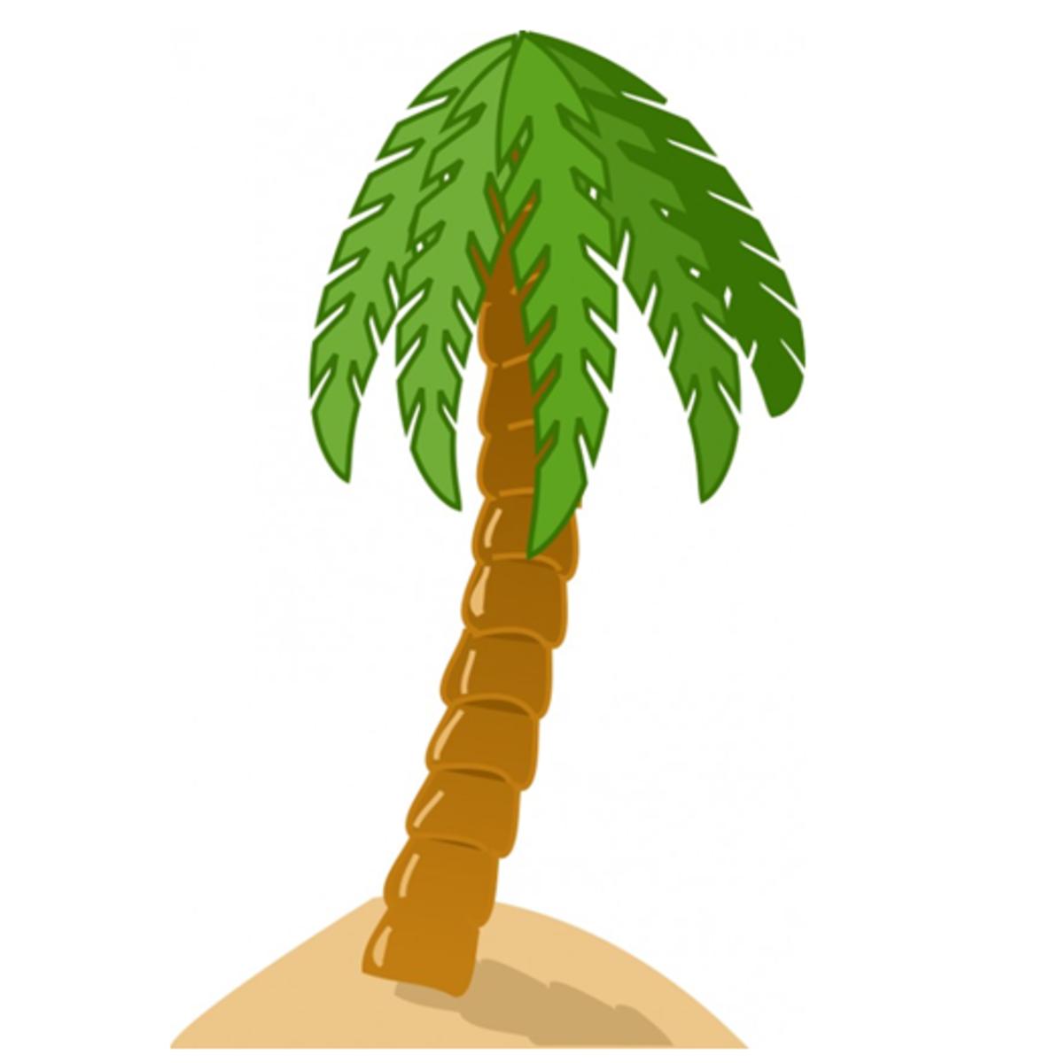 Palm on Sandy Beach