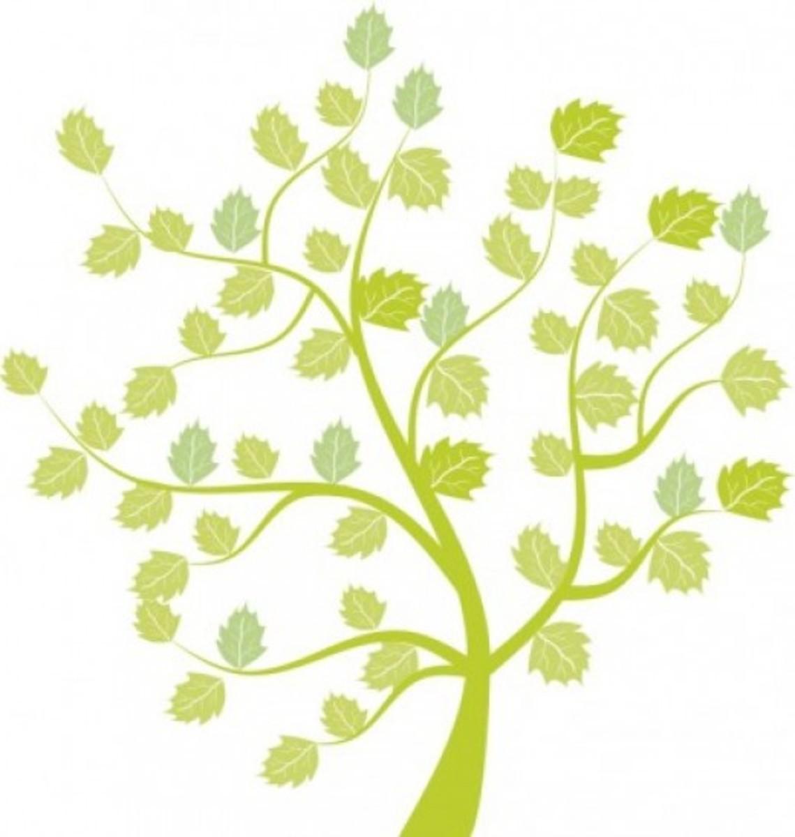 Oak Tree with Leaves