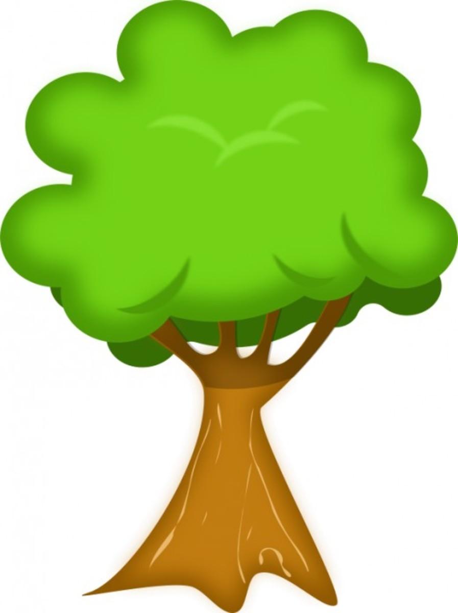 Bushy Leafed Tree