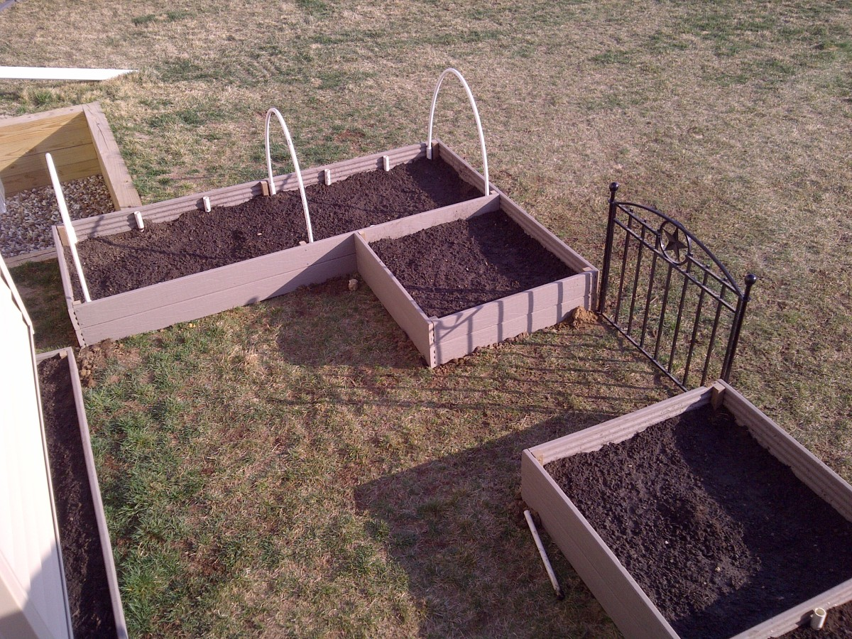 The Expense of a Garden Can Quickly Pay For Itself