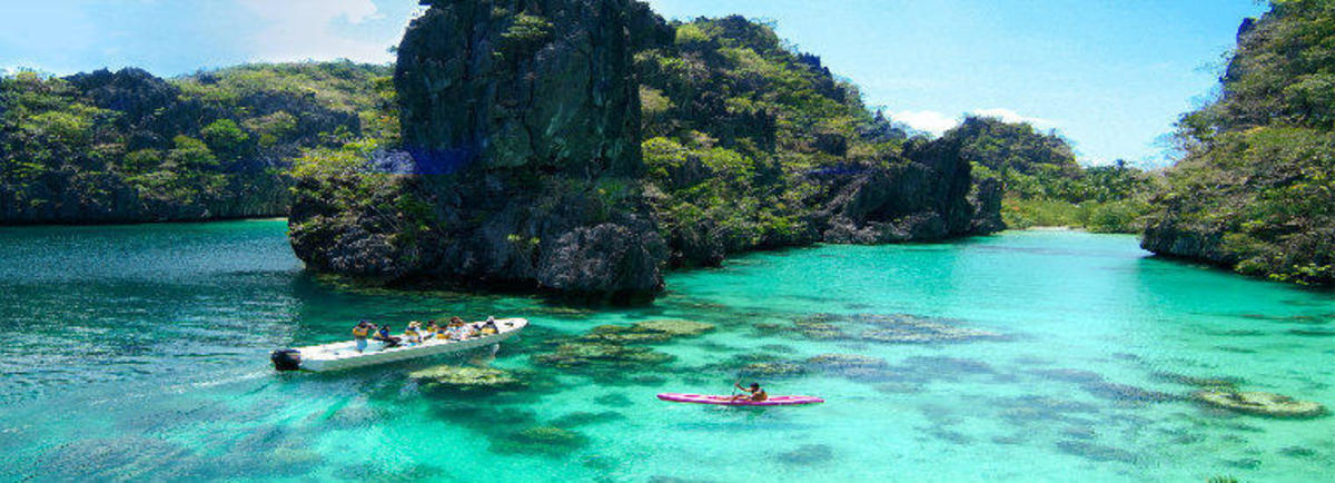 Philippines Islands Venomous Snakes And Poisonous Spiders