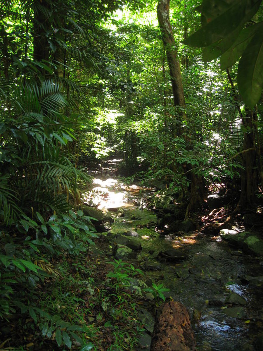 Daintree Rainforest, tropical rainforest, north east coast of Queensland, Australia .