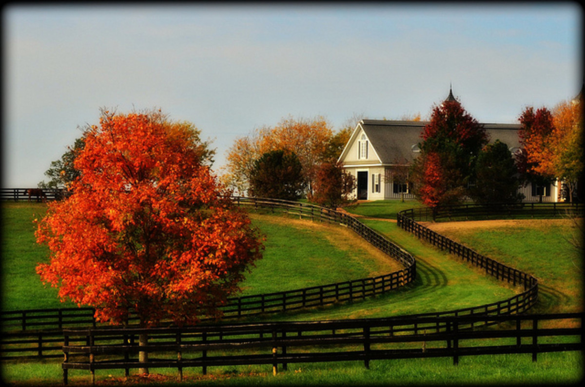Lexington, Kentucky in the fall