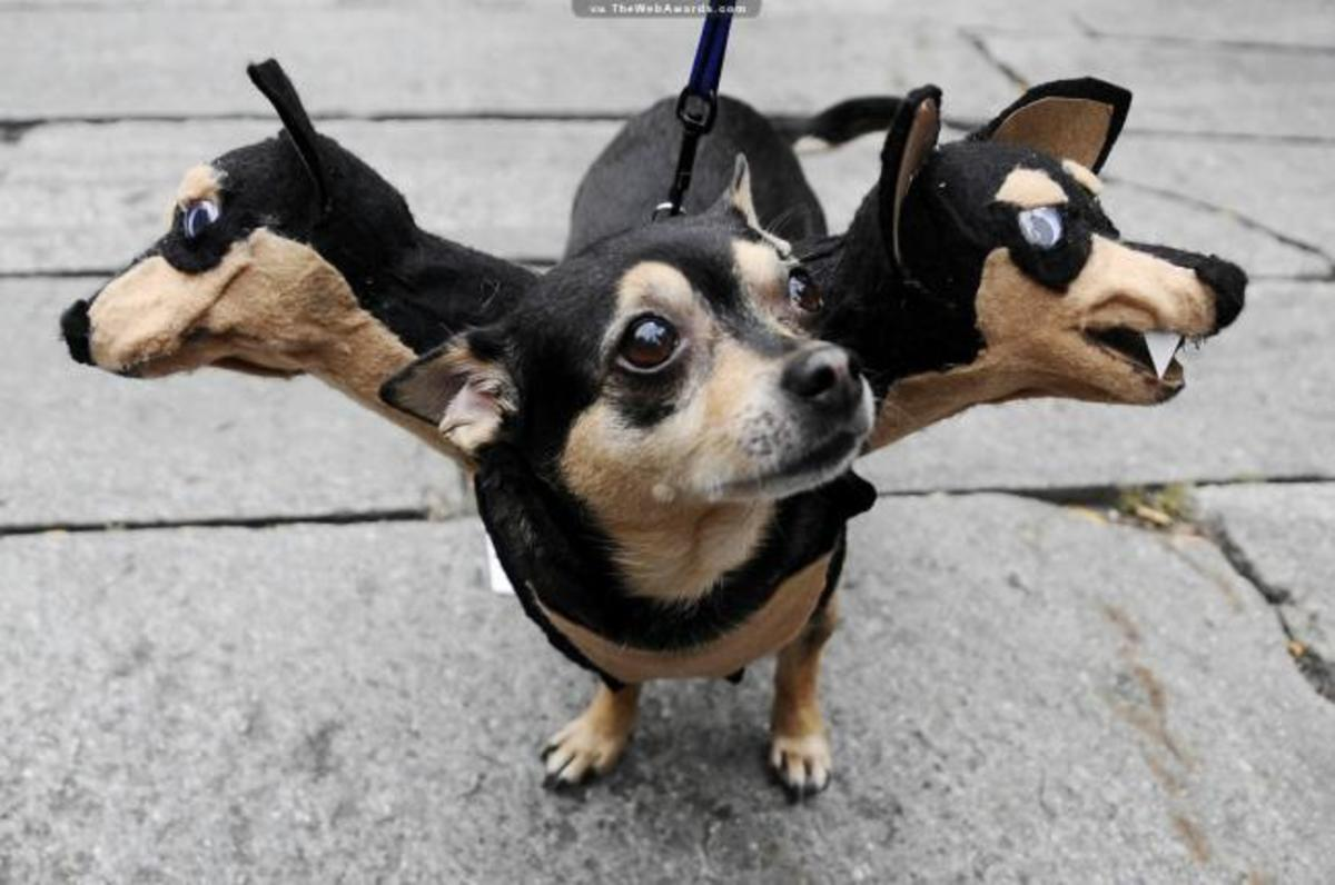 Spider Costumes for Medium Dogs & Spider Costumes for Dogs of all Sizes | HubPages