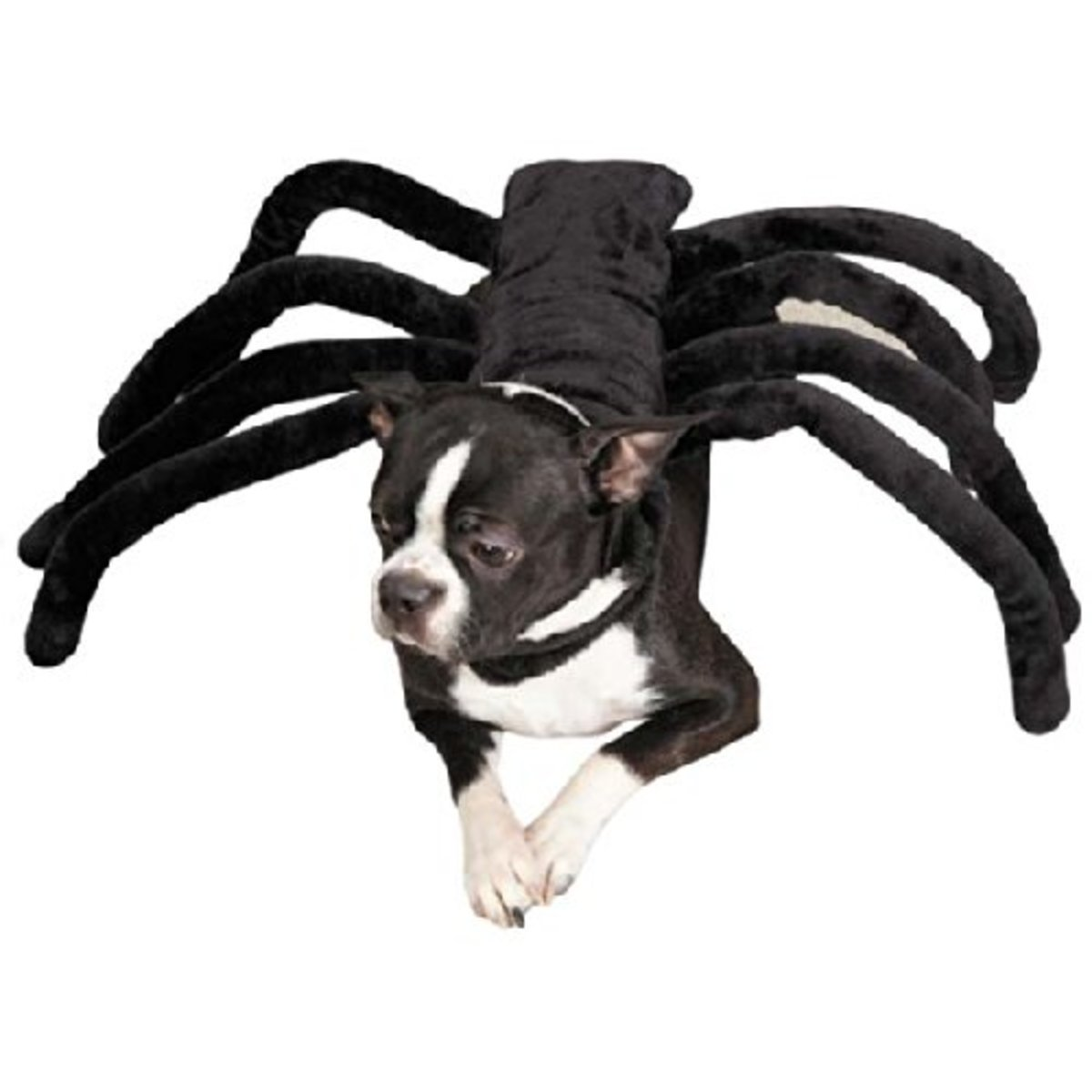 spider-costumes-for-dogs-of-all-sizes