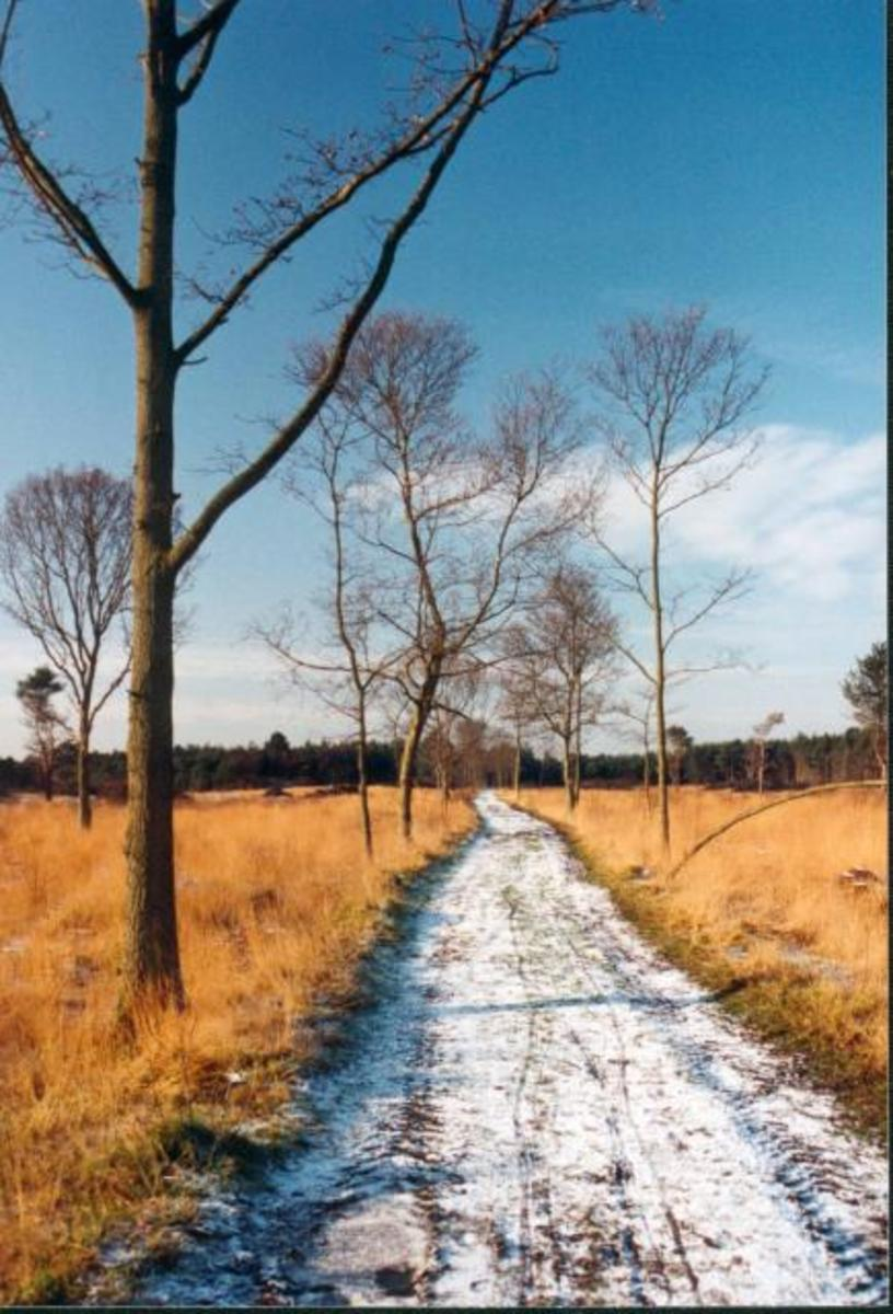 Skipwith Common is a great place to walkm watch wildlife and walk your dog Share Alike Licence http://creativecommons.org/licenses/by-sa/3.0/