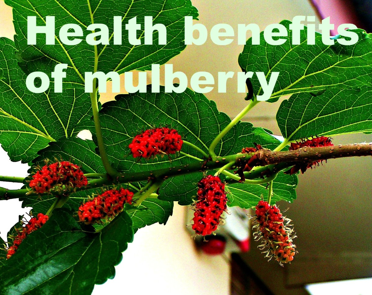 a24c099474 Health Benefits of Mulberry | HubPages