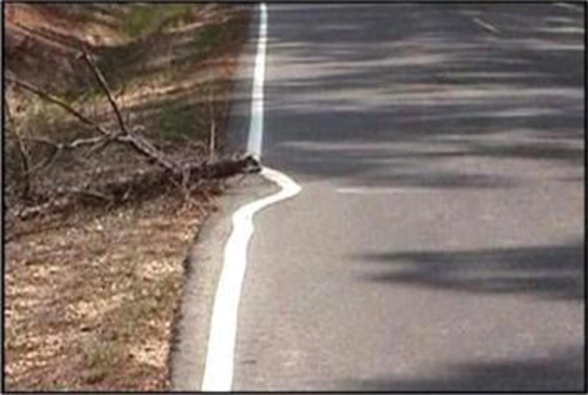 This is a great example of stupid decisions. It was obviously easier to drive around the dead tree than to stop for a minute and move the tree. Right?