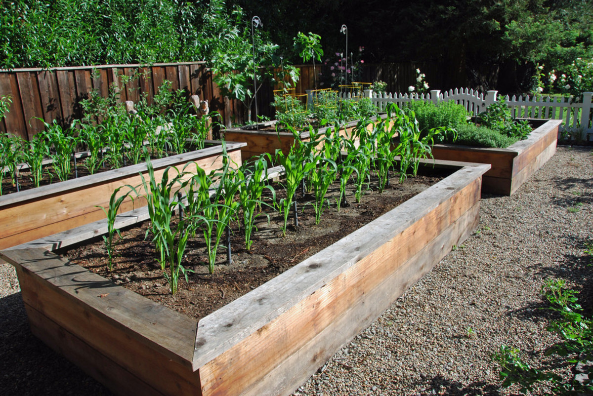 You can do your gardening in raised beds and harvest lots of nutritious delightfully delicious vegetables.