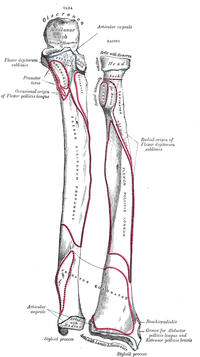 human-anatomy-lesson-22