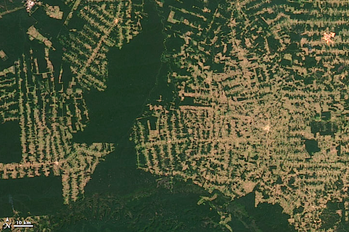 Satellite view of deforestation in Rondônia, western Brazil, 2012, by NASA, modified by author.  Original page shows progression from 2000.