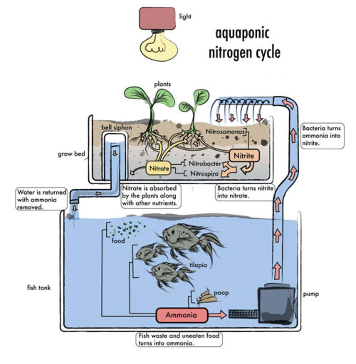 Aquaponics System: How it works