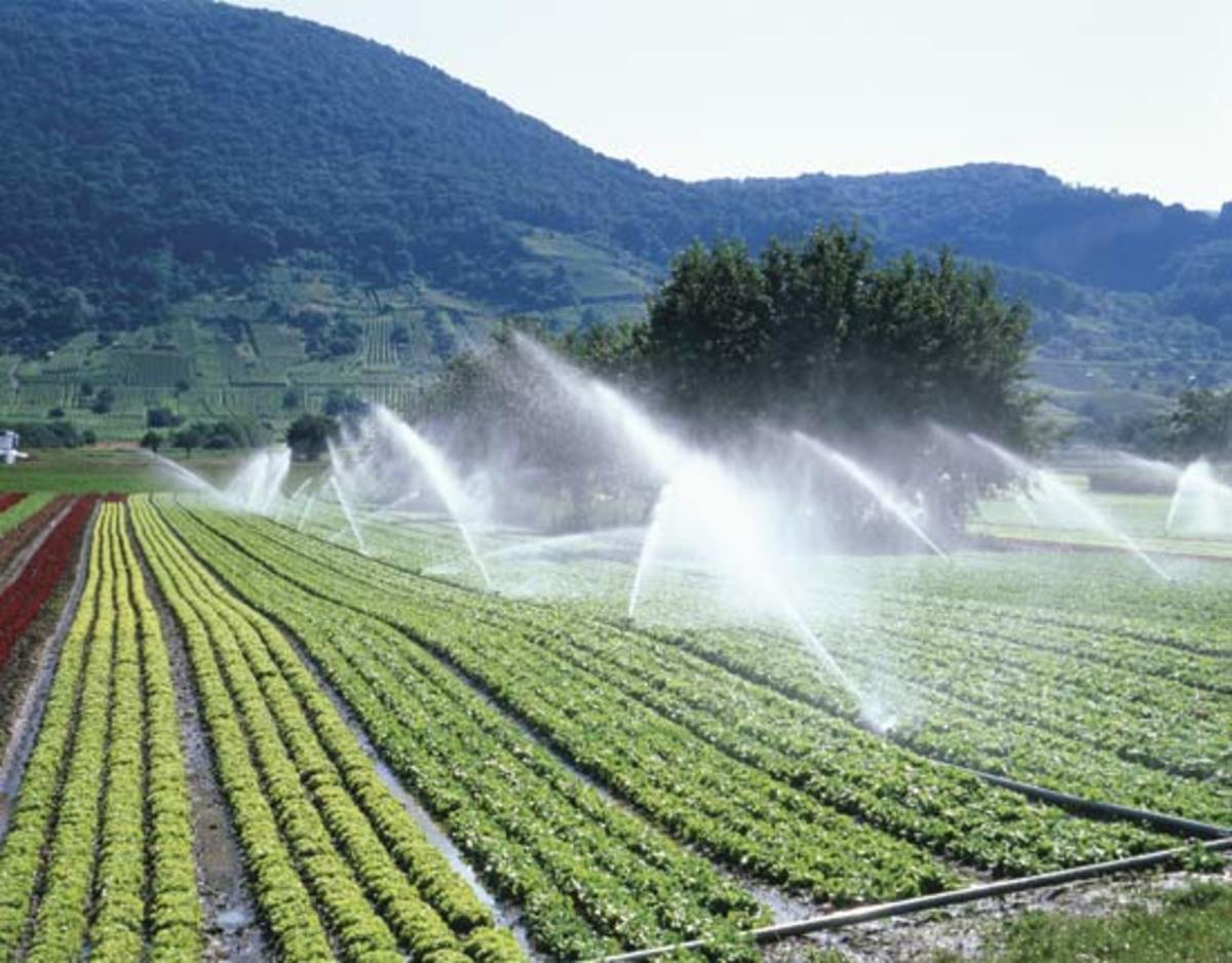 Water Sprinklers in large Farms