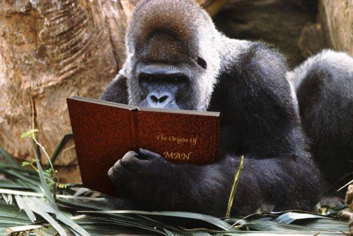 Studious George- 'I can't believe humans are more intelligent than us, I'll show to them how to solve the PHYTAGOriAN theorem ""