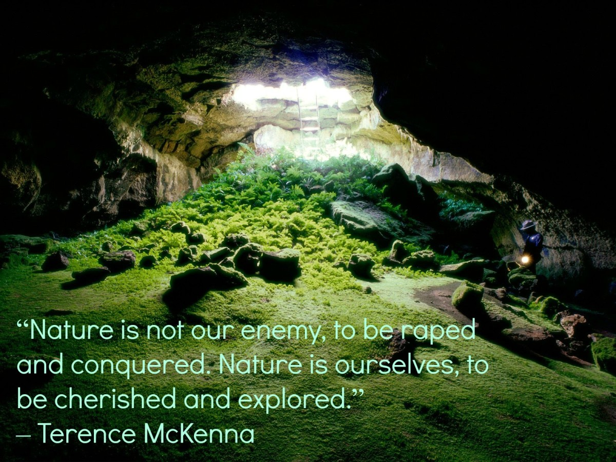 Nature's Quote from TErence Mckenna