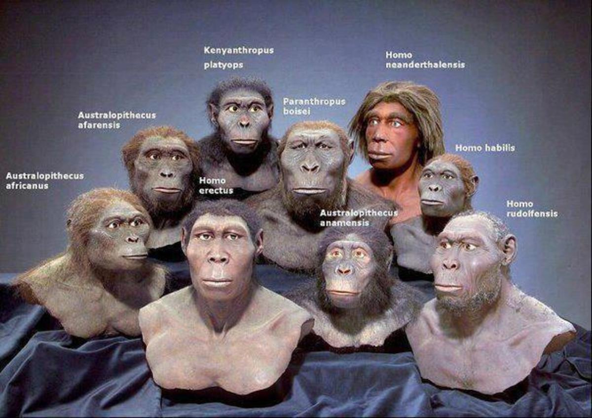 Meet our RELATIVES-recognize THEM ?
