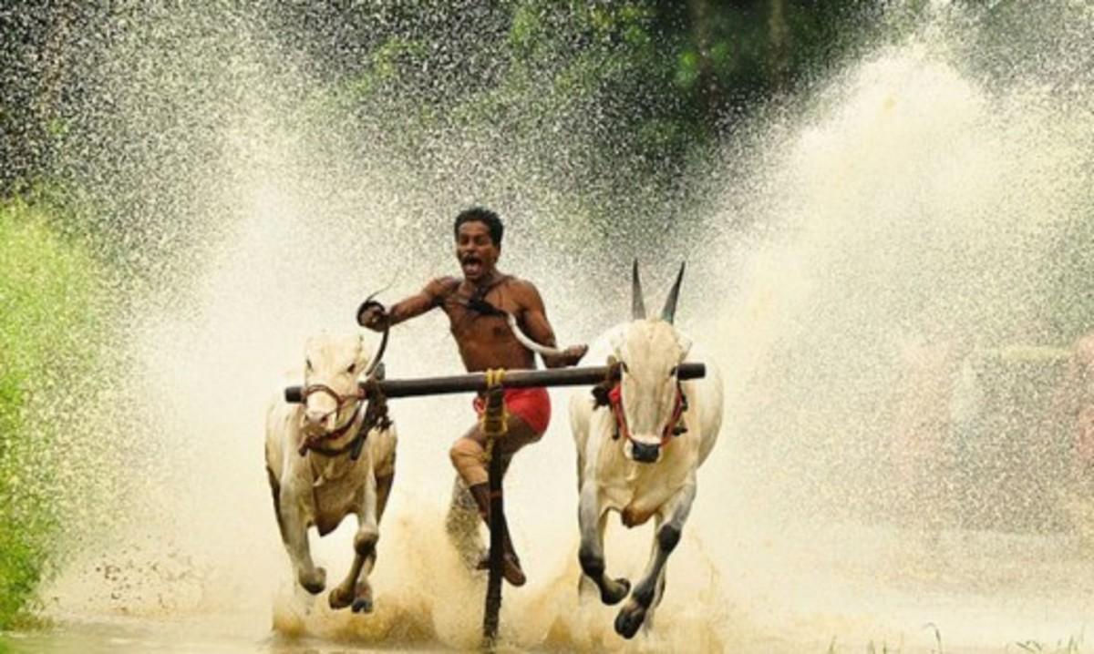Water bull racing
