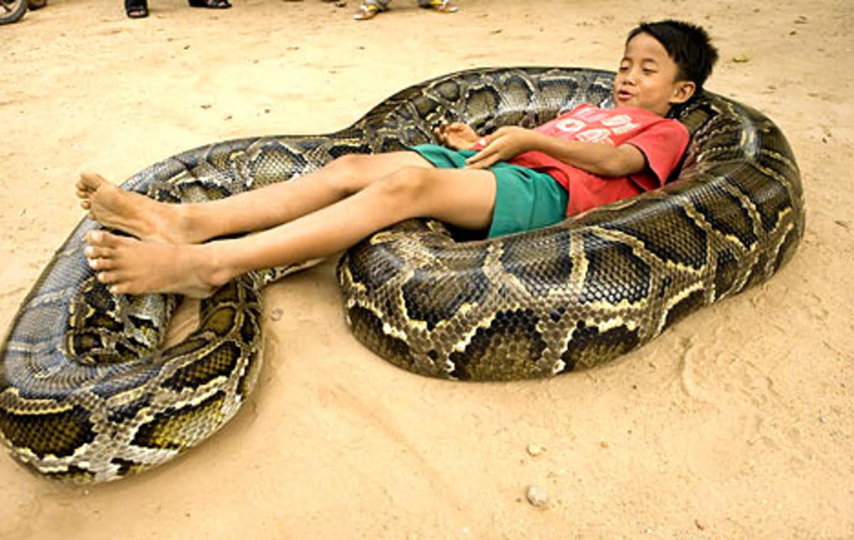 Who says pythons don't make loving pets?