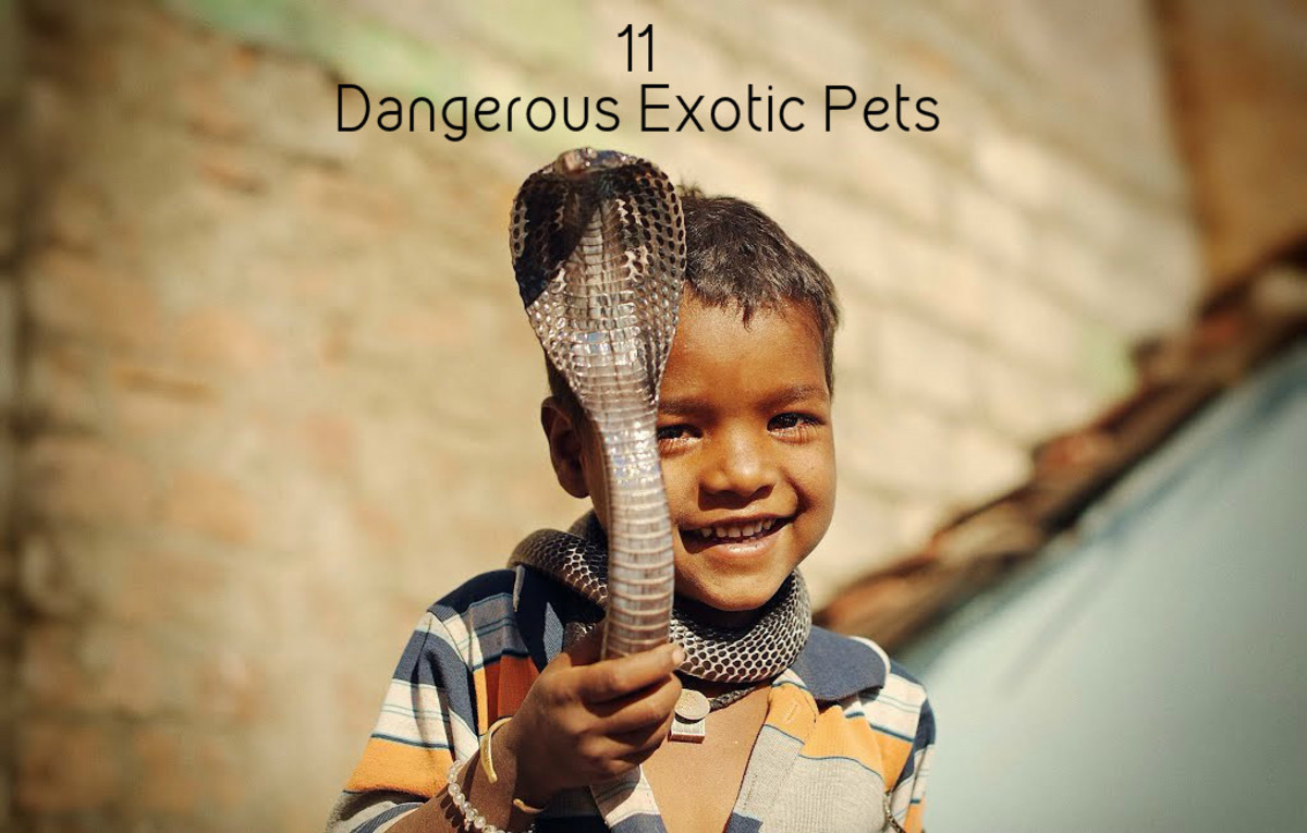 11 Most Dangerous Wild and Exotic Indian Pets