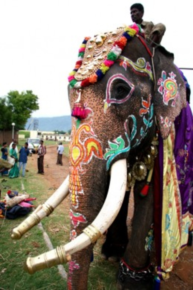 Dasara Festival Elephants, Mysore India