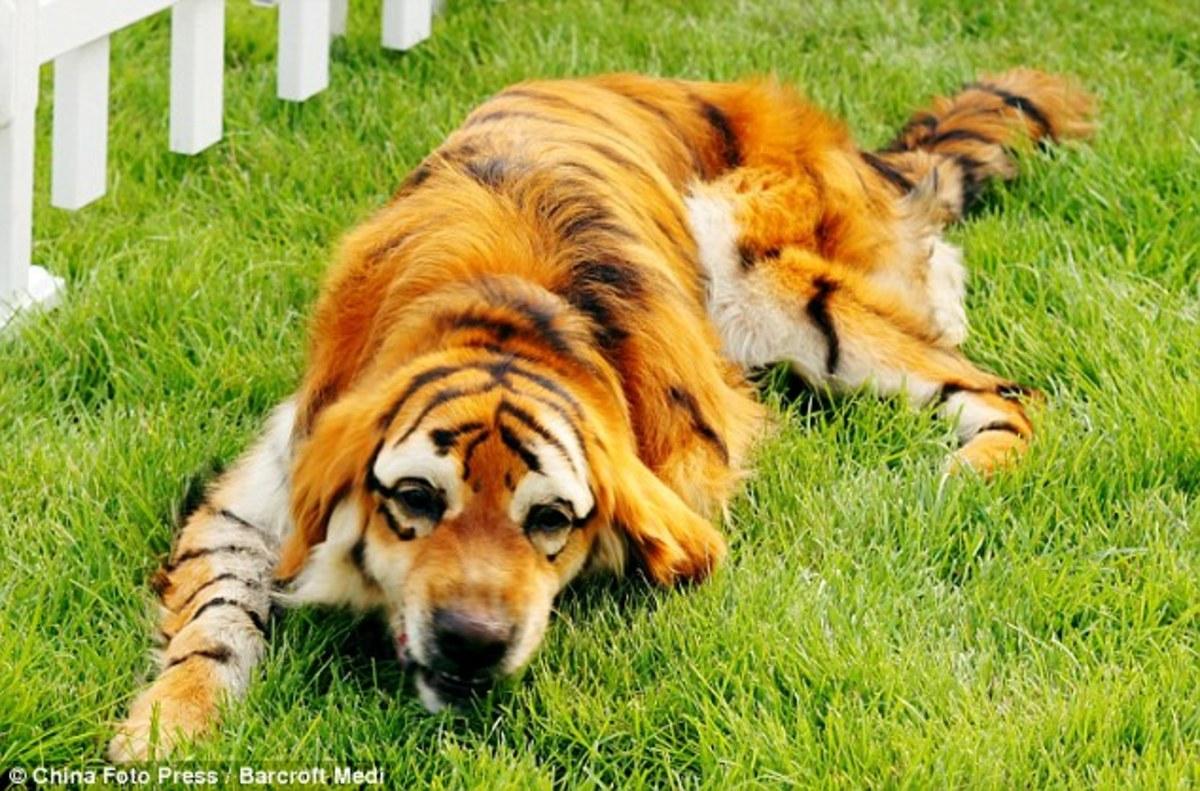 top-10-rare-and-designer-dog-breeds