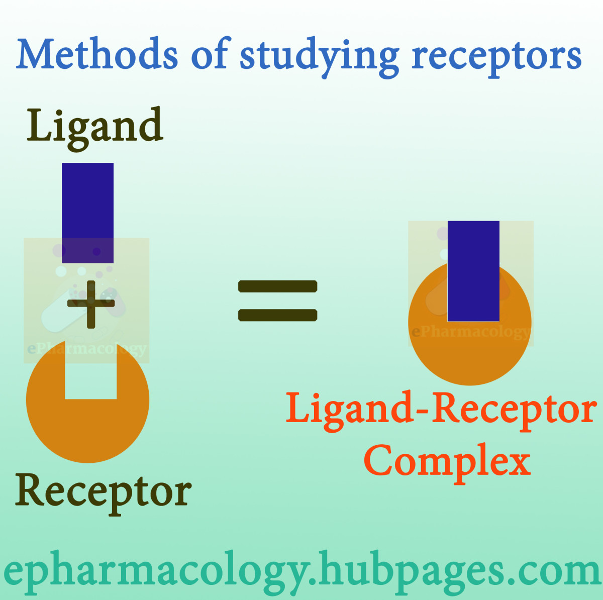 What are the methods of studying receptors?