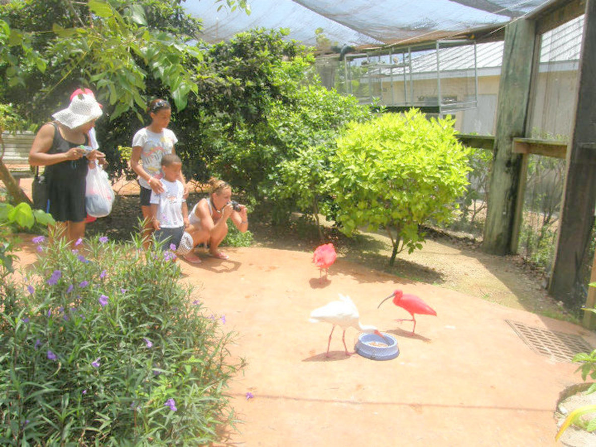 At the bird sanctuary within the Turtle Farm
