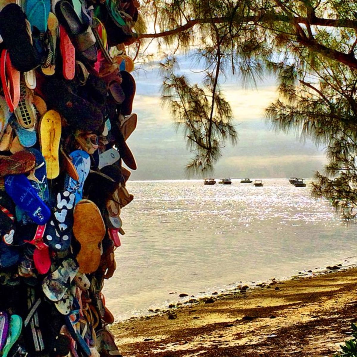 It started with just one flip-flop. but now there are hundreds, joined by assorted sneakers, slippers and even flippers, nailed to a casuarina tree bordering the coastal road that runs through Grand Cayman's South Sound.