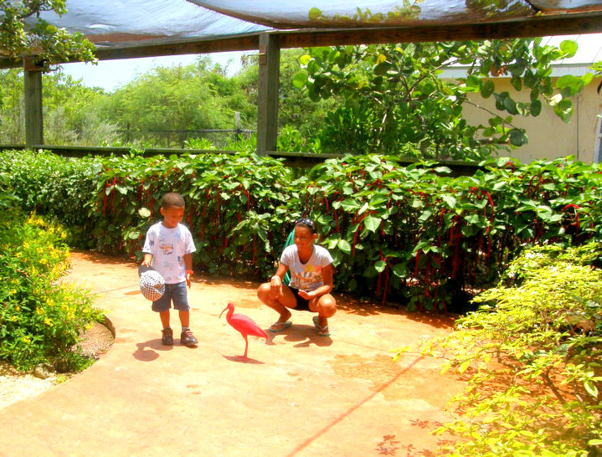 Bird Sanctuary at the Turtle Farm
