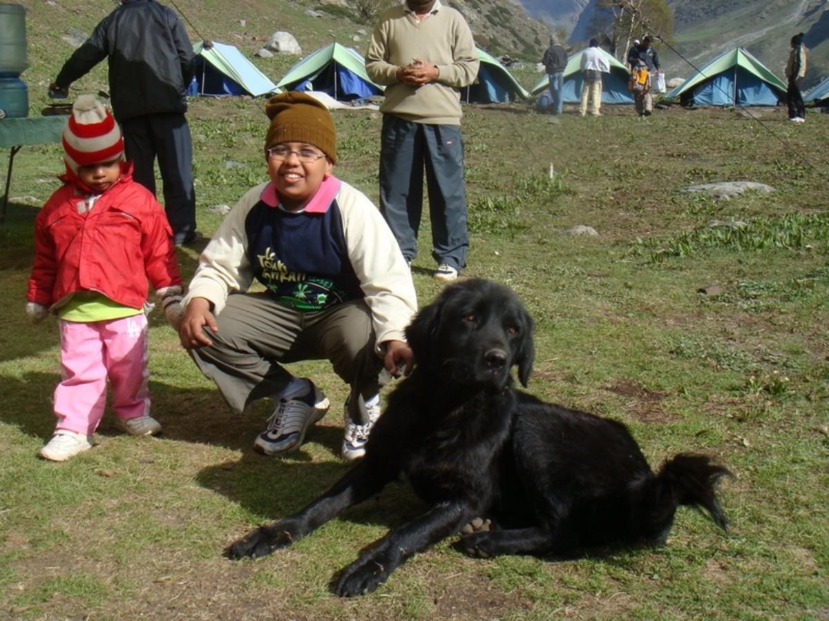 Nepali Hill Dog (Nepalese Mountain dogs)