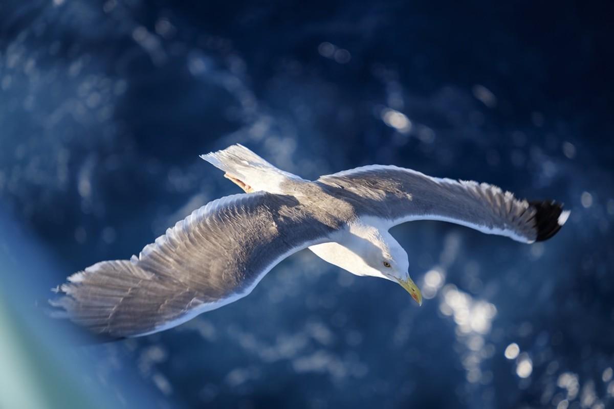 Flights of Fantasy - A Poem