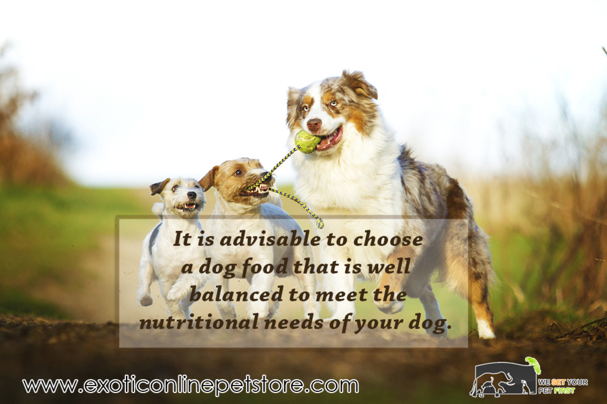 Choosing the Right Foods for Your Dog's Sensitive Stomach
