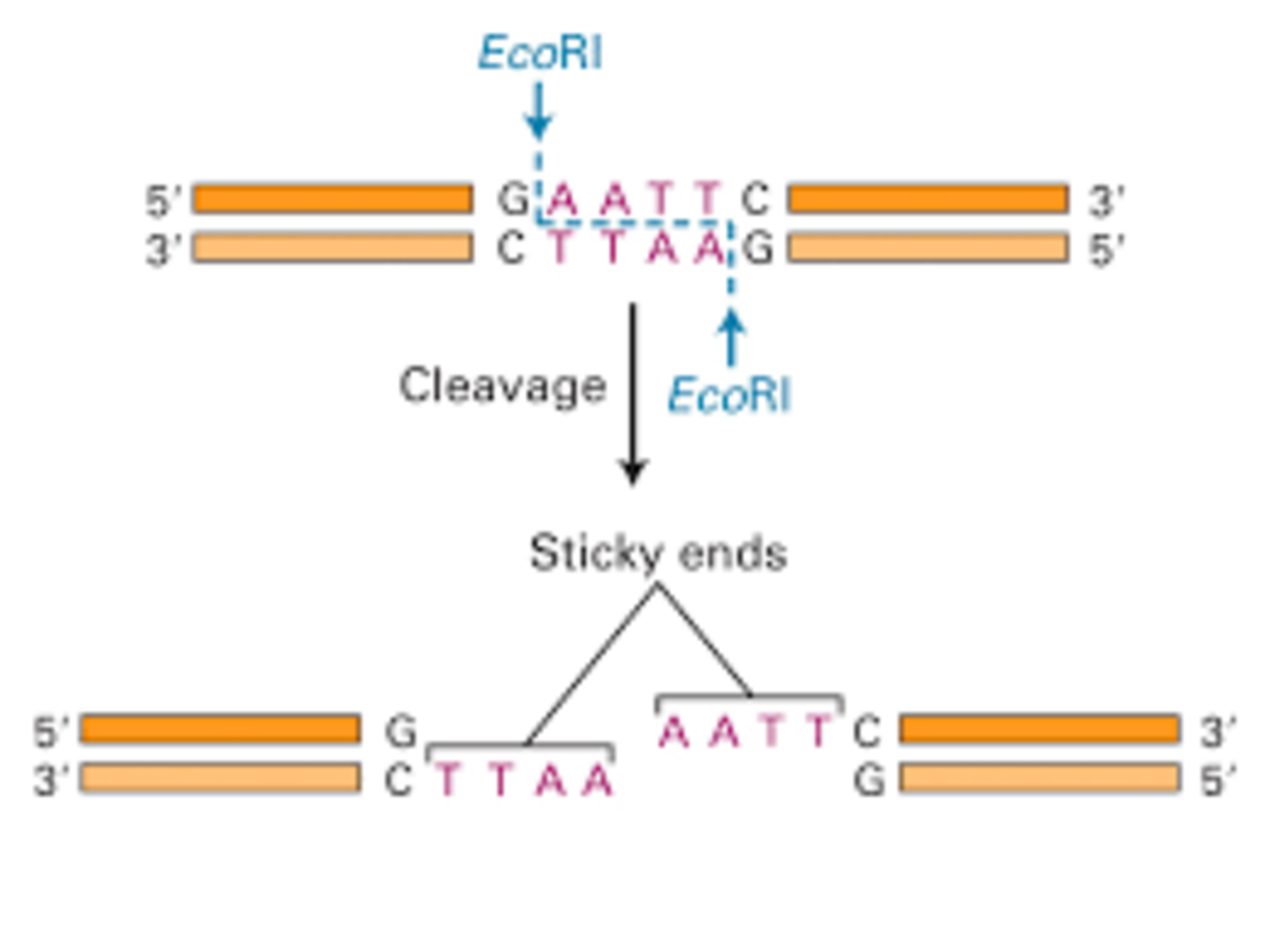 production-of-recombinant-therapeutic-proteins