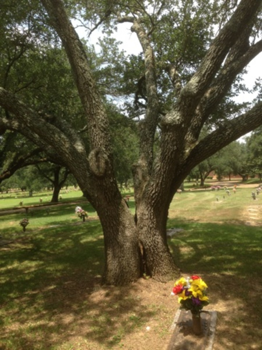 Jackie and Joe together forever under the Kissing Tree.