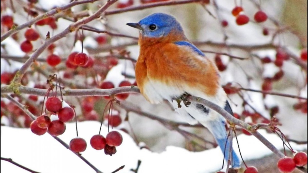 Birds of Winter ... A Poem With Music