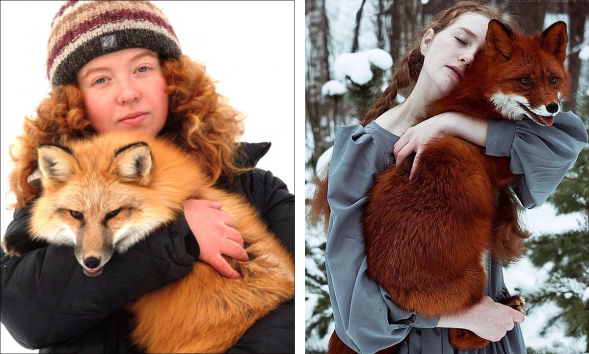 Russian Red Fox as Pets