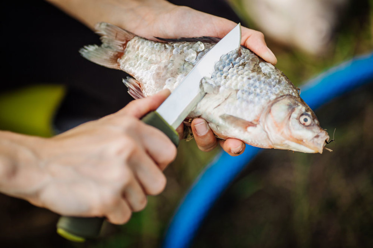 how-to-catch-clean-and-cook-a-fish-while-camping-out
