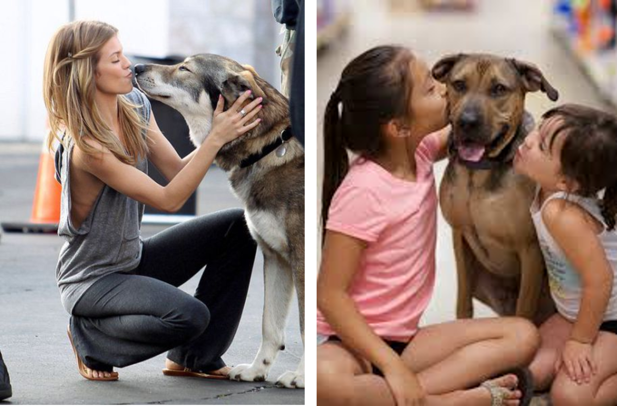The Friendliness of dogs and wolves