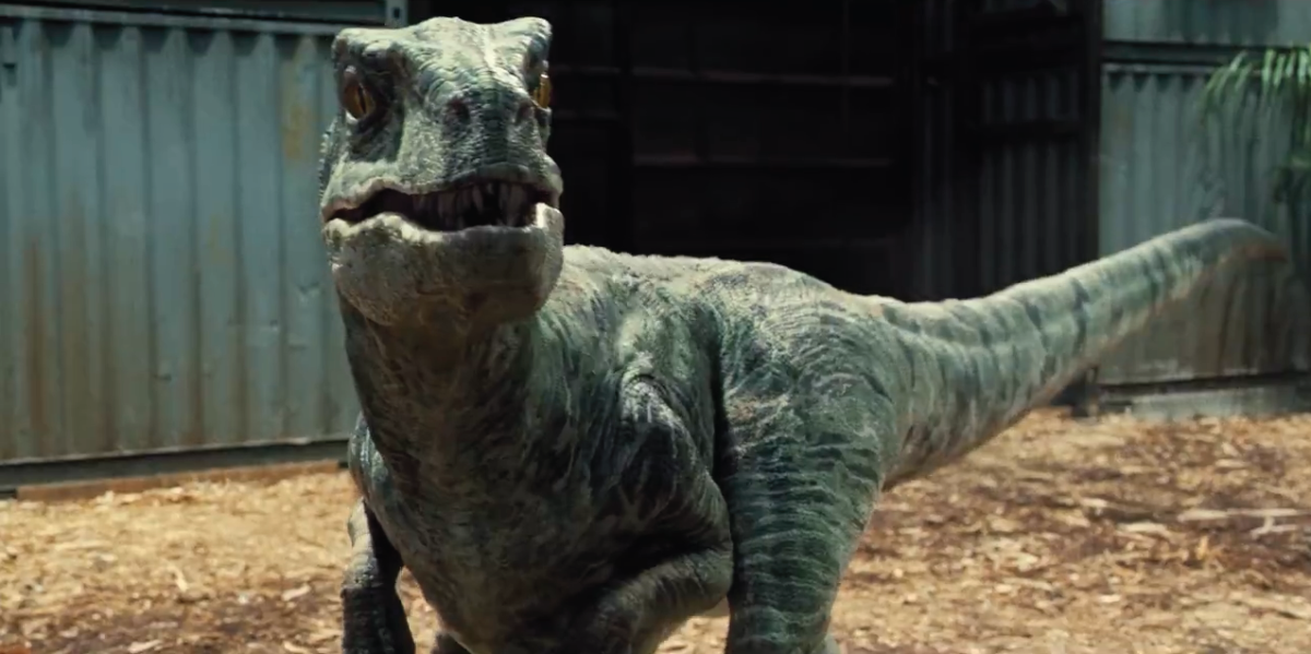 (cc image, Jurassic Park Wiki) Velociraptor, As Portrayed in the Jurassic Park Movie Franchise (Similar Features, But Entirely Different Body to the Real Velociraptor)