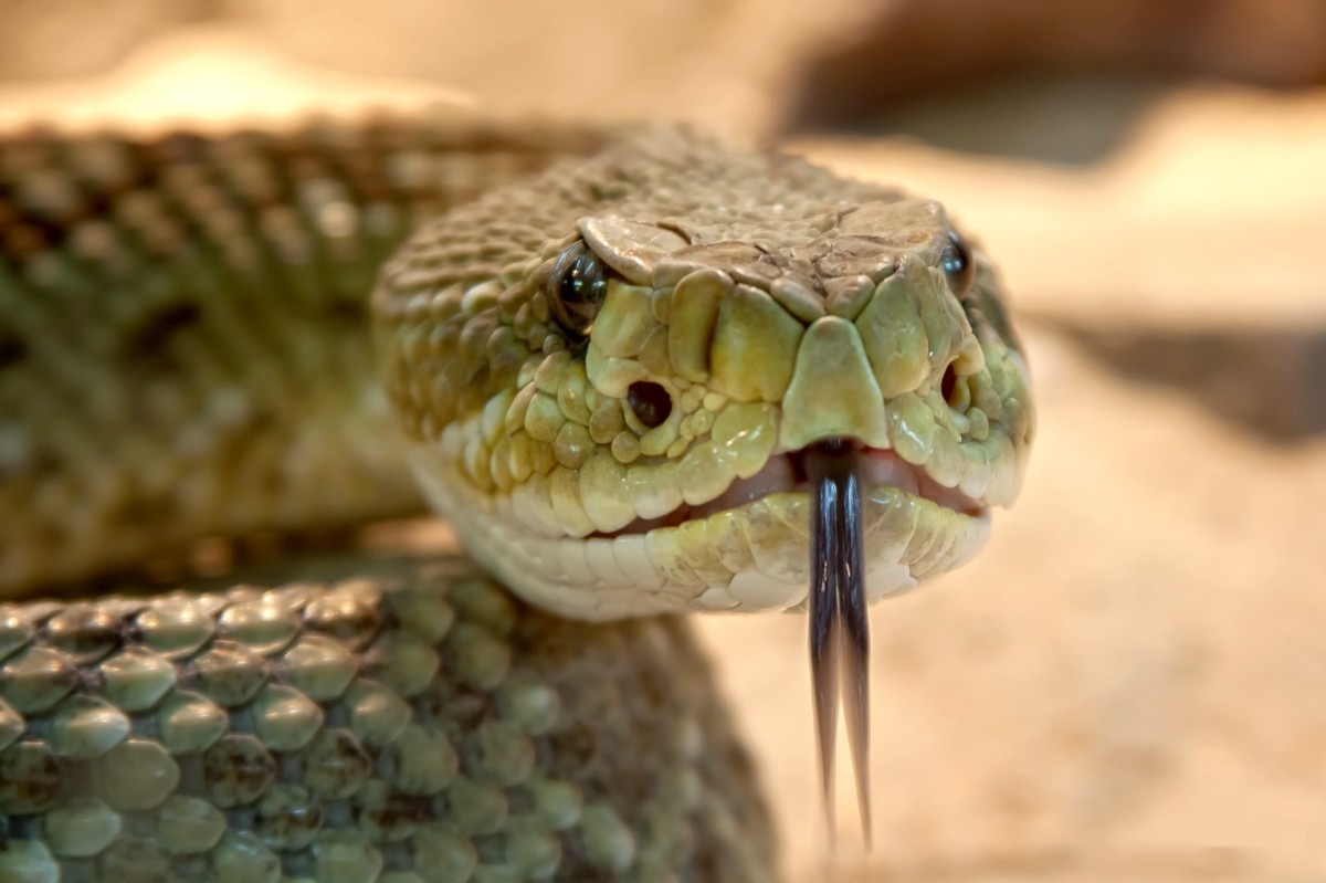 The Ultimate Guide to Workplace Snakes: 10 Ways to Beat Toxic Coworkers
