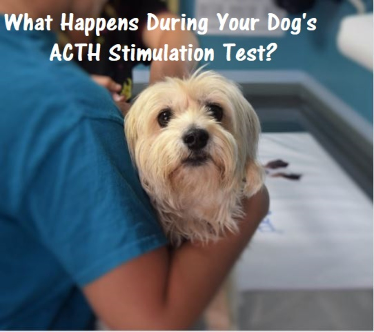 What Happens During Your Dog's ACTH Stimulation Test?