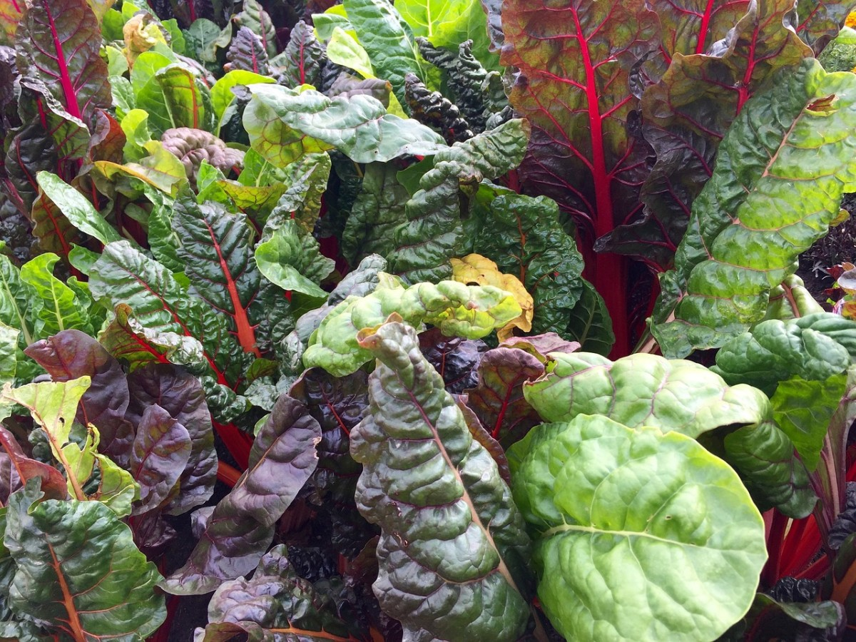 list-of-healthy-green-leafy-vegetables