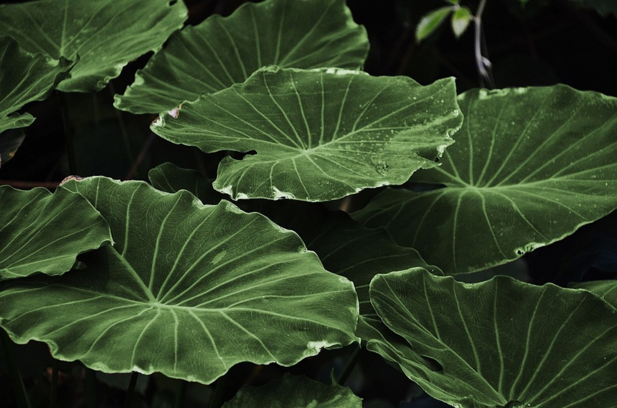 Plant Detects Evil