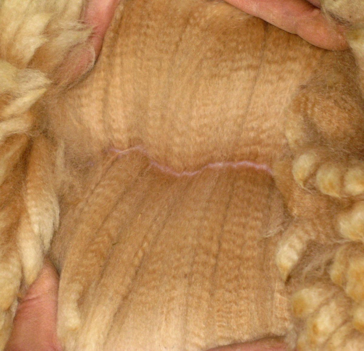 Alpaca wool fibers are so strong and very warm.
