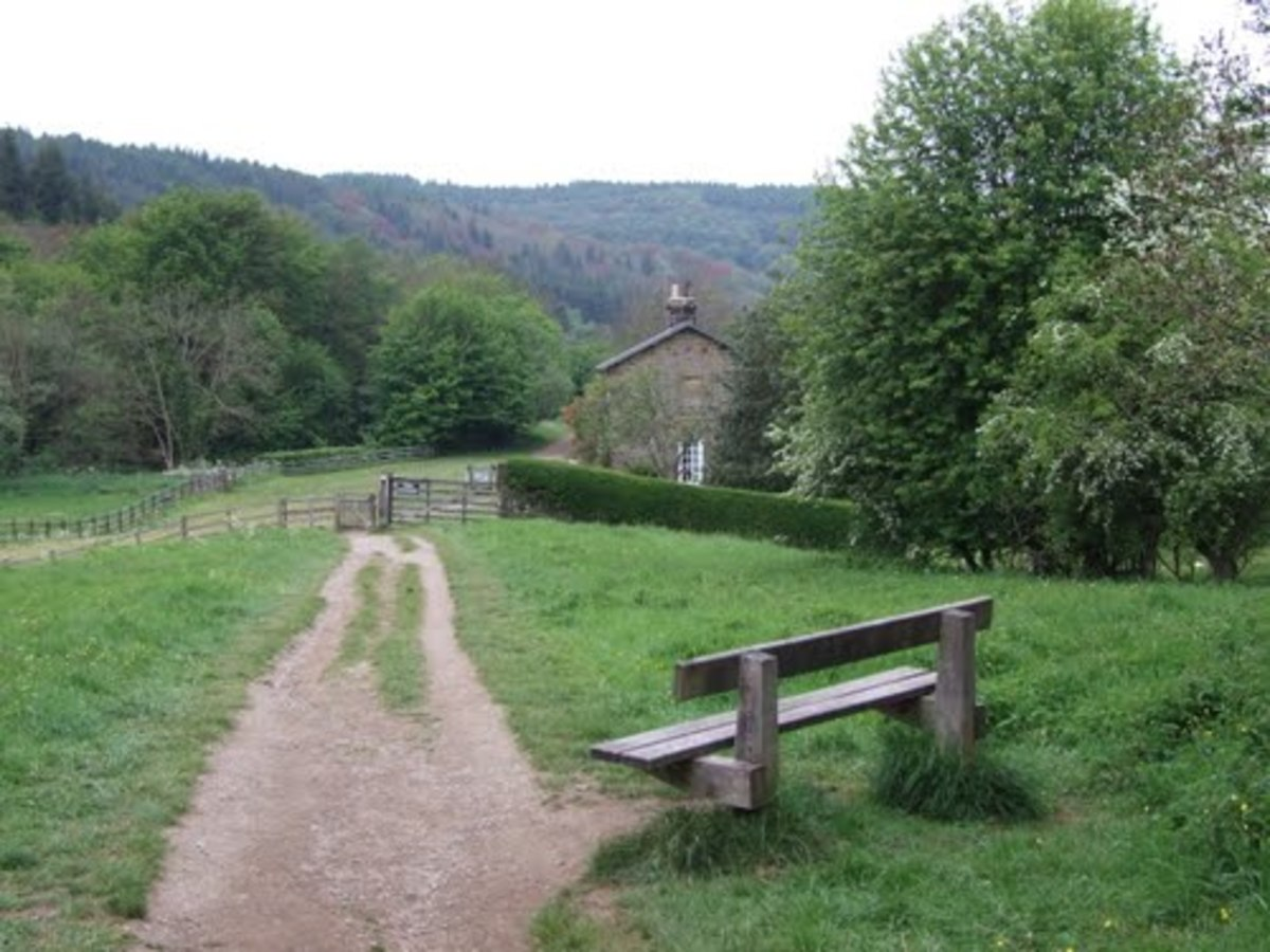 This view of the incline shows how steep it was. The station was about where the house stands on the right - I imagine the bench is for those who run out of puff at an early stage. I've climbed it at least once and it's a challenge all right.