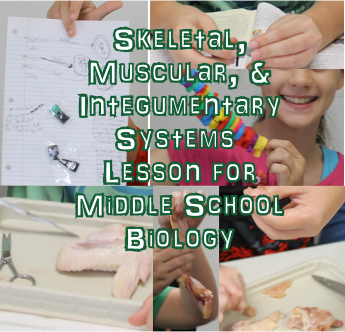 Middle School Biology Lesson on the Skeletal, Muscular, & Integumnetary Systems