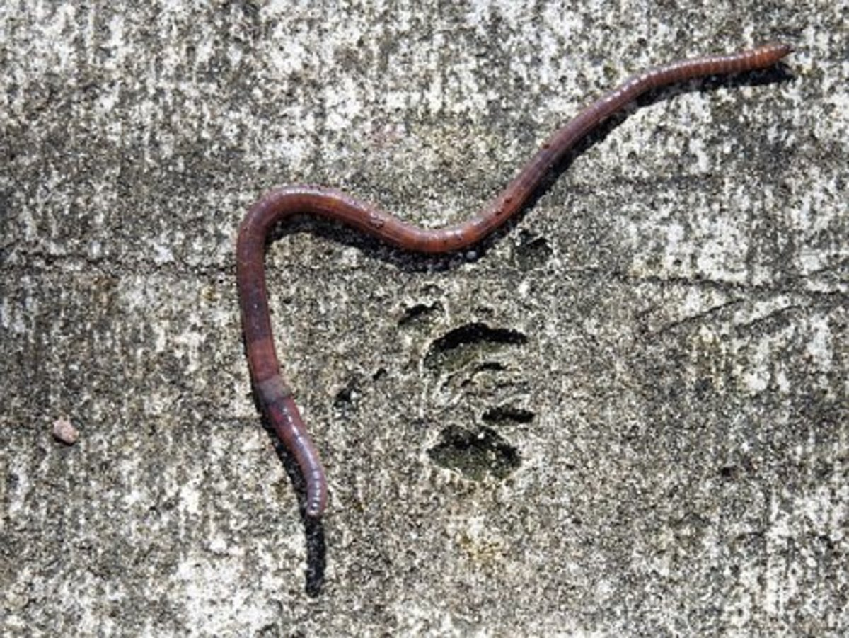 Raising Earthworms as Livestock